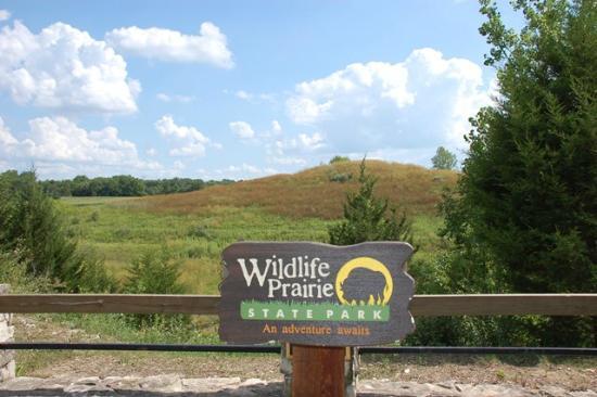 wildlife-prairie-state